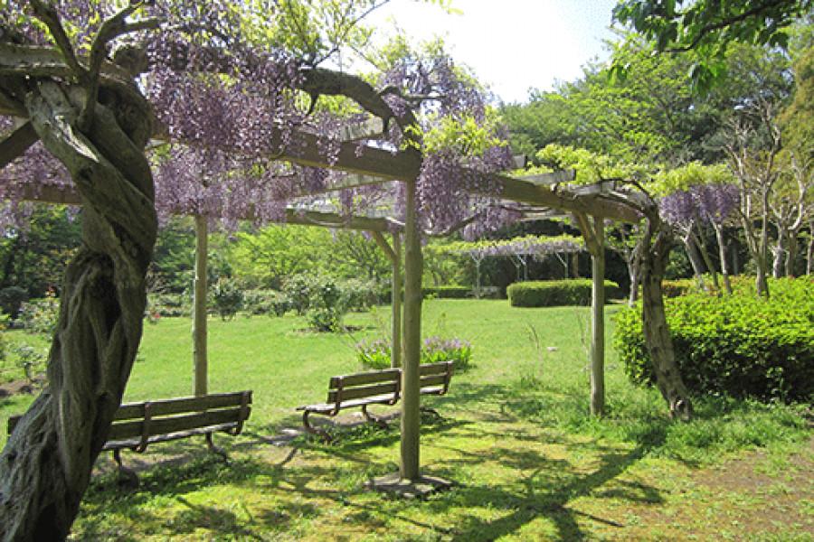 สวนโอบะโจะชิ