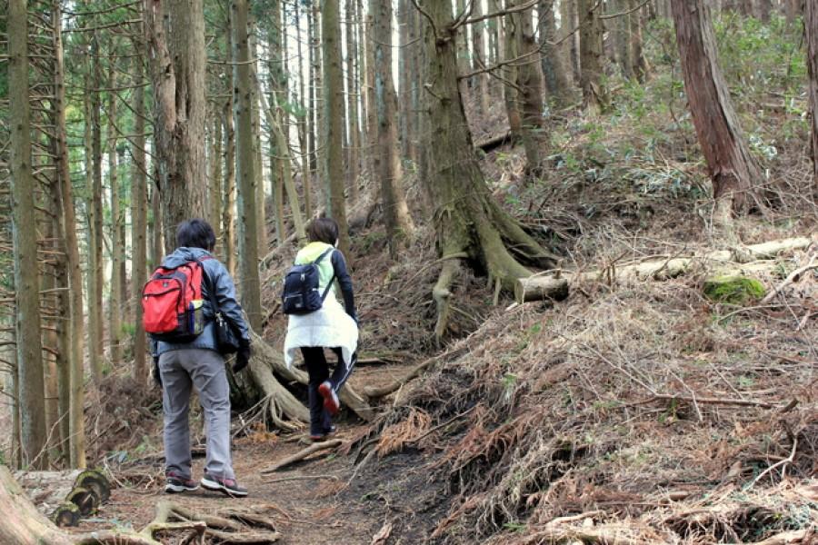 矢倉岳登山路線