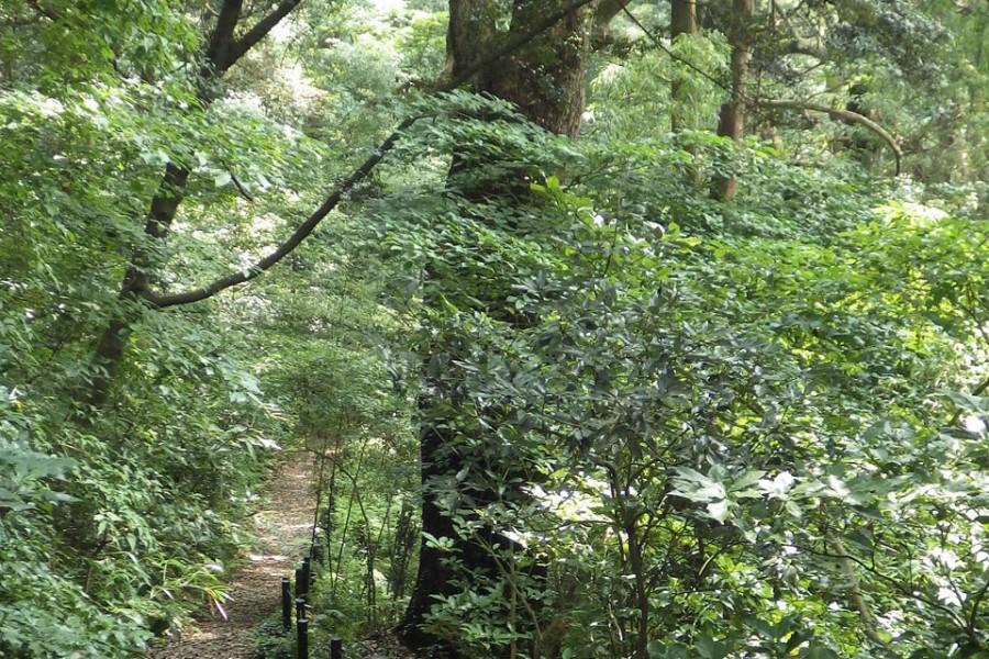 마나즈루 자연보도(오린 산책로・삼림욕 산책로・반바우라 산책로)