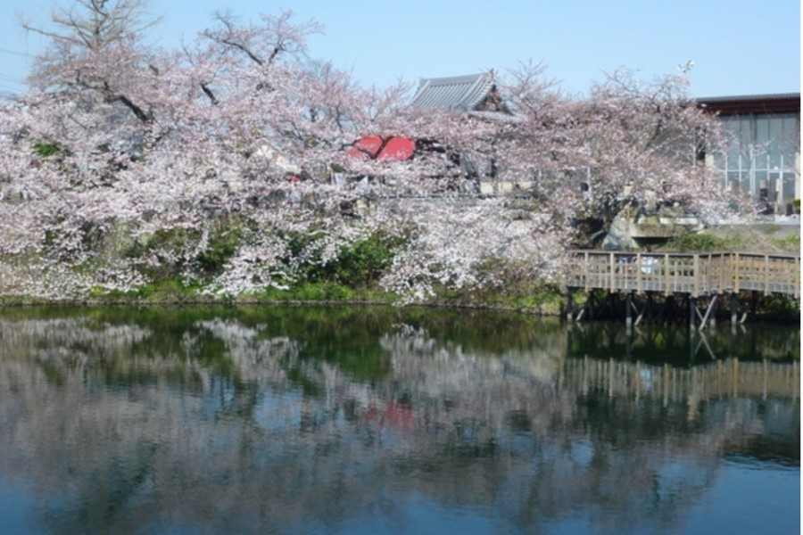 今泉名水櫻公園