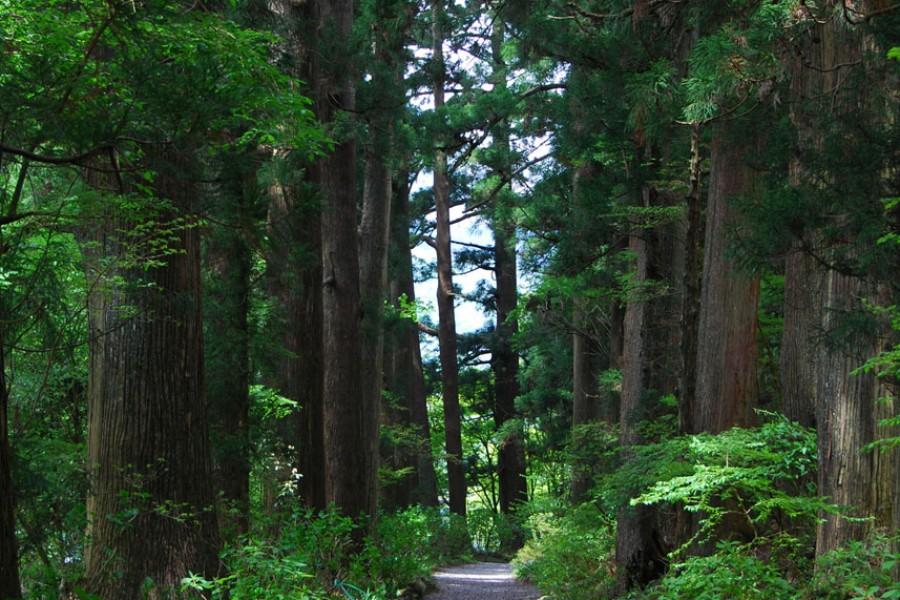 Alter Highway mit Zedernholz gesäumt - 2