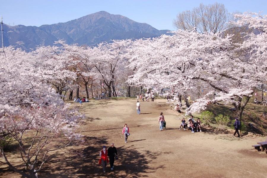 弘法山公園 - 2