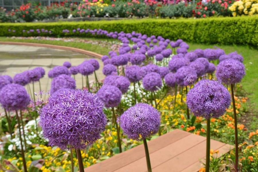 Vườn hoa Odawara - 2