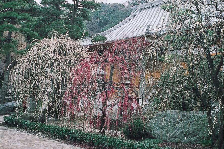 Le temple Joryu-ji