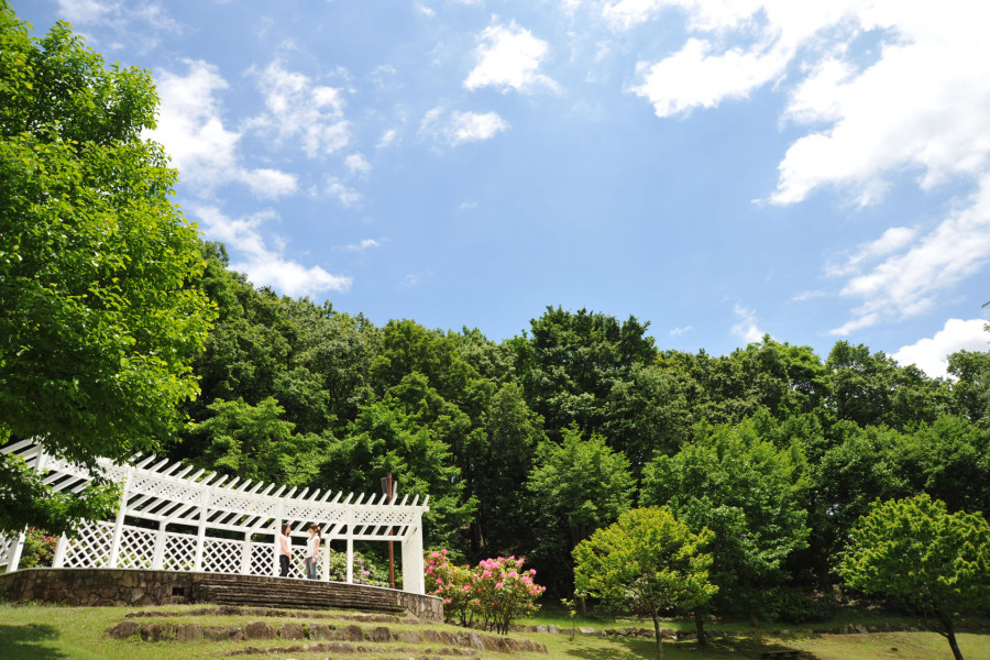 七泽森林公园