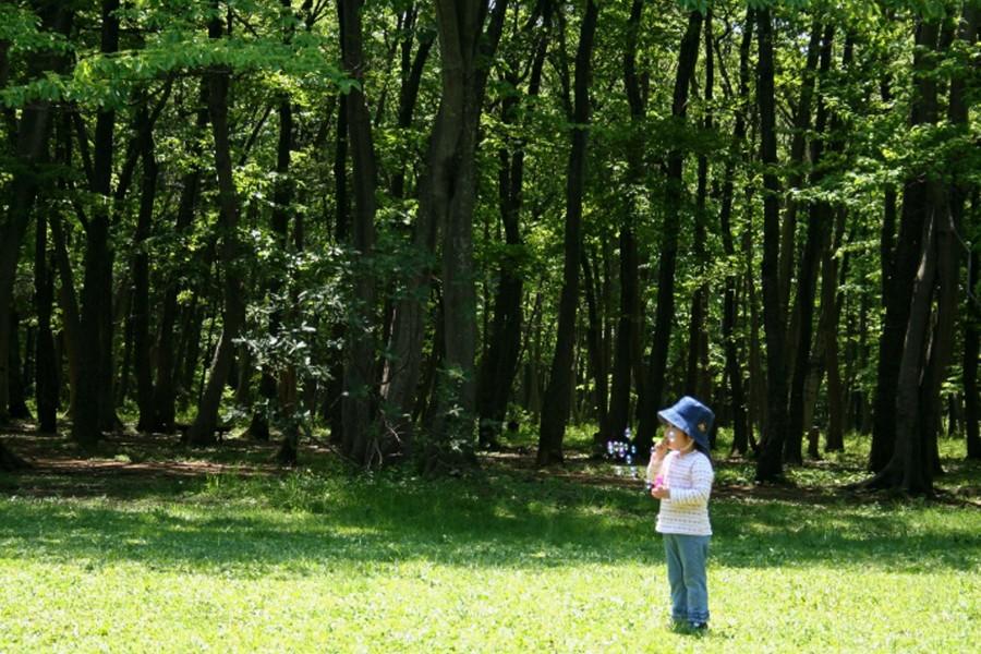 木もれびの森 - 2