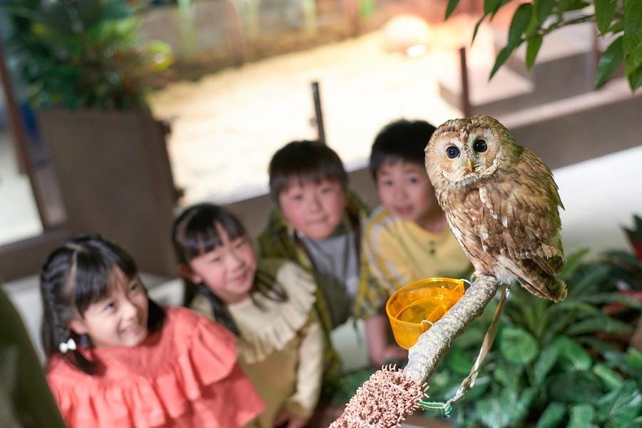 横滨大自然体感博物馆 - 4