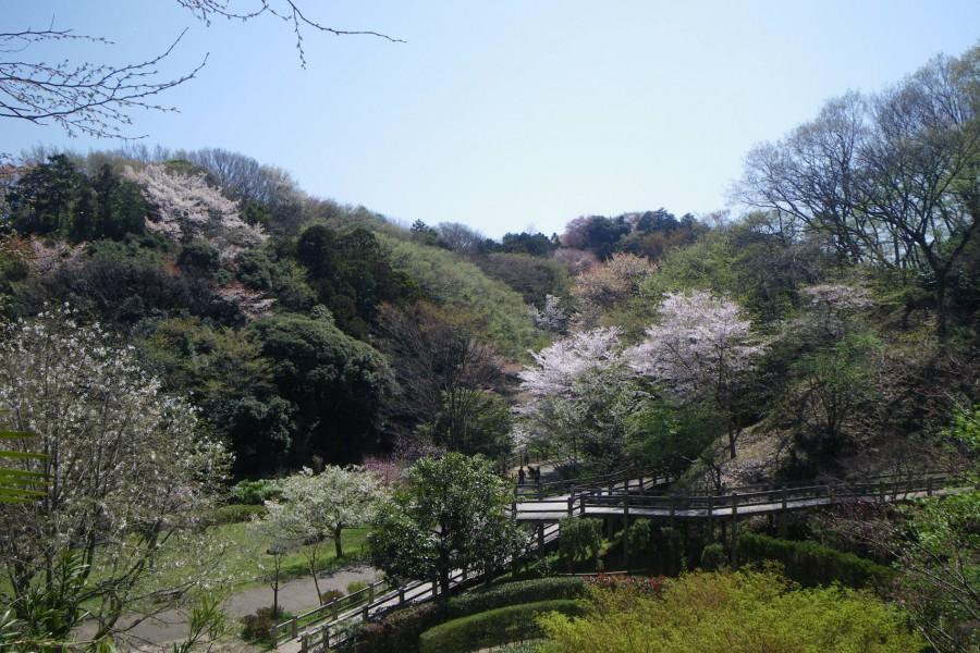 Kamakura Zentral-Park - 2