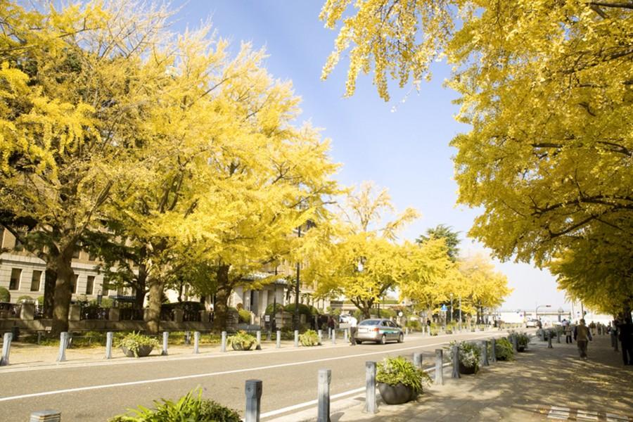 일본 거리 - 1