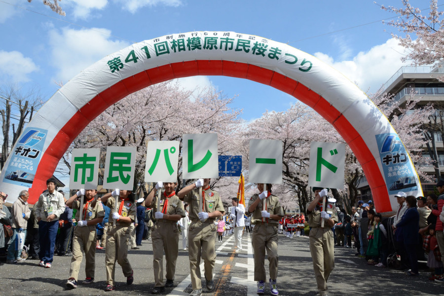 Le Festival Sagamihara Citizen Sakura ( cerisiers en fleurs) - 1