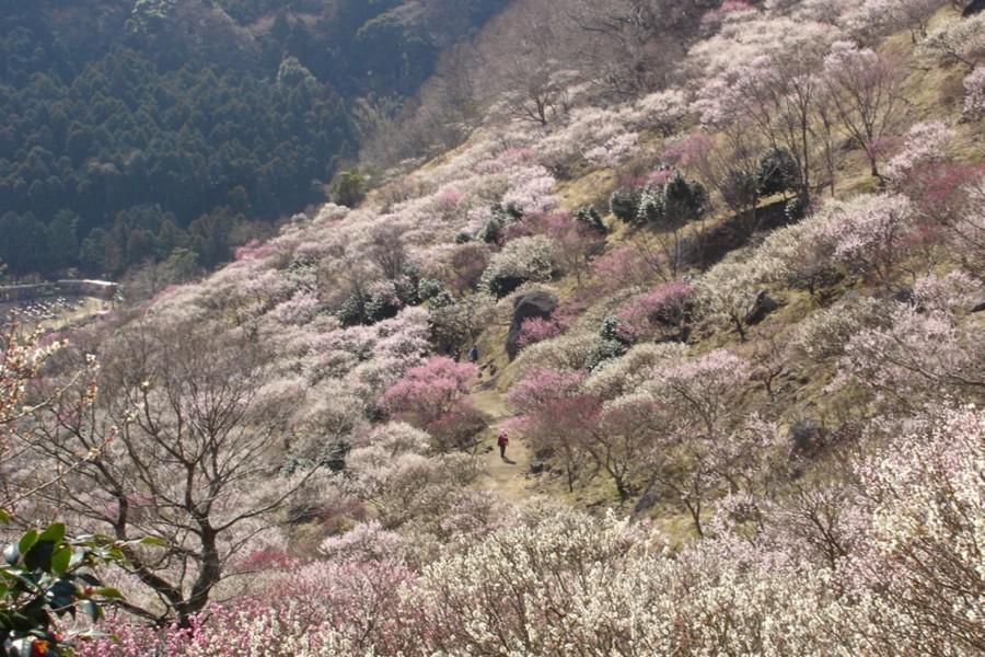 Parc Makuyama - 1