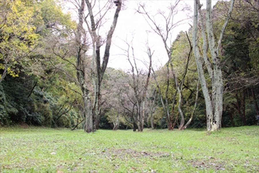 Daimaru Garden - 1