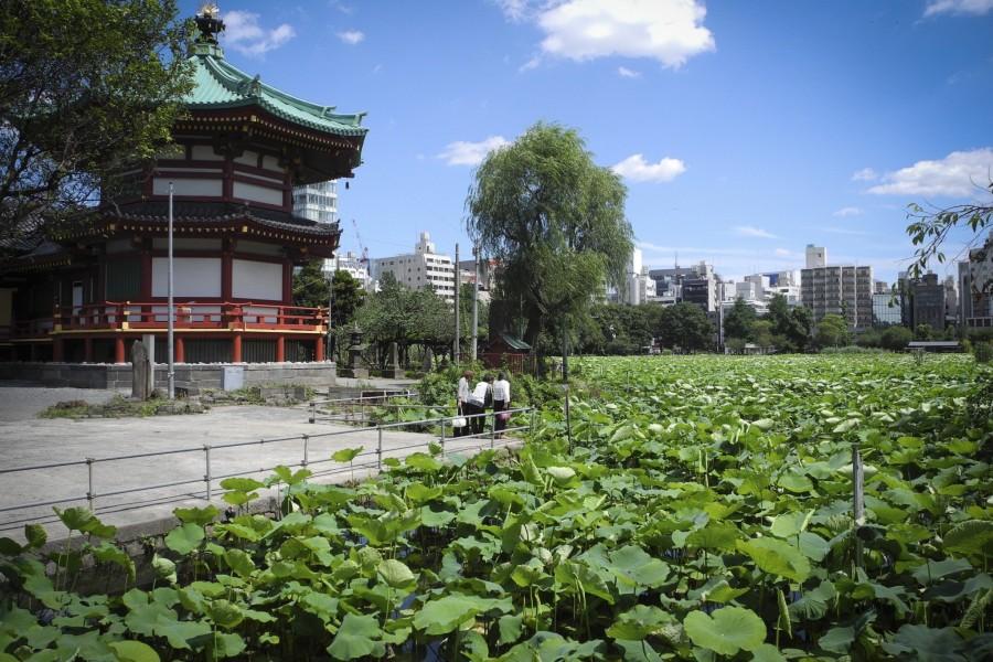 Công viên Ueno - 2