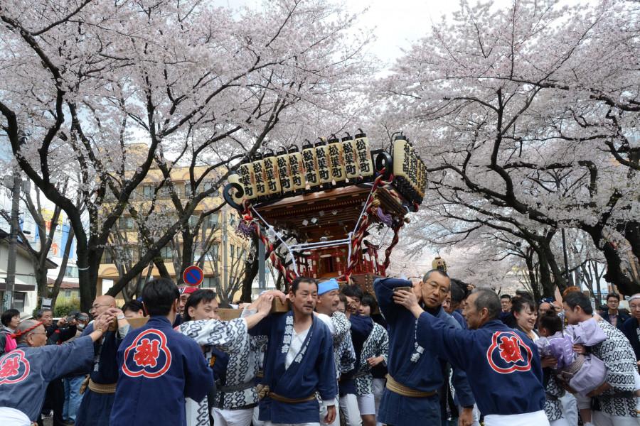 Le Festival Sagamihara Citizen Sakura ( cerisiers en fleurs) - 2