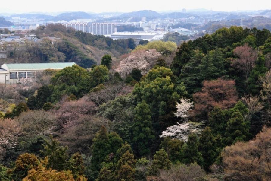Kamariya Shimin no Mori (Khu rừng của người dân Kamariya)