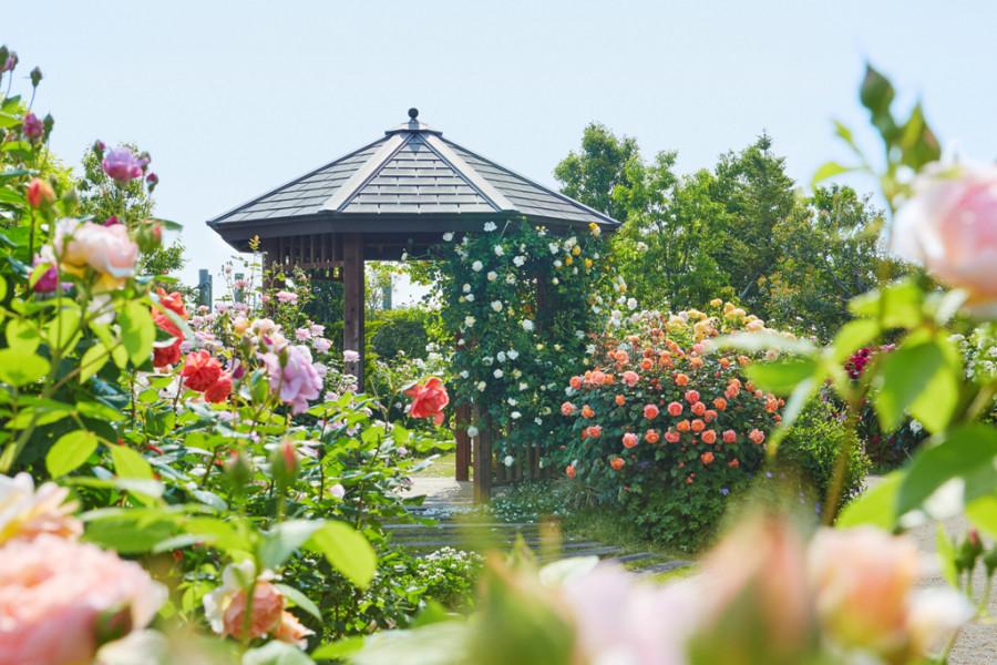 ศูนย์ดอกไม้และพรรณไม้แห่งจังหวัดคะนะงะวะ, สวนคะนะ (ผักและดอกไม้) - 1