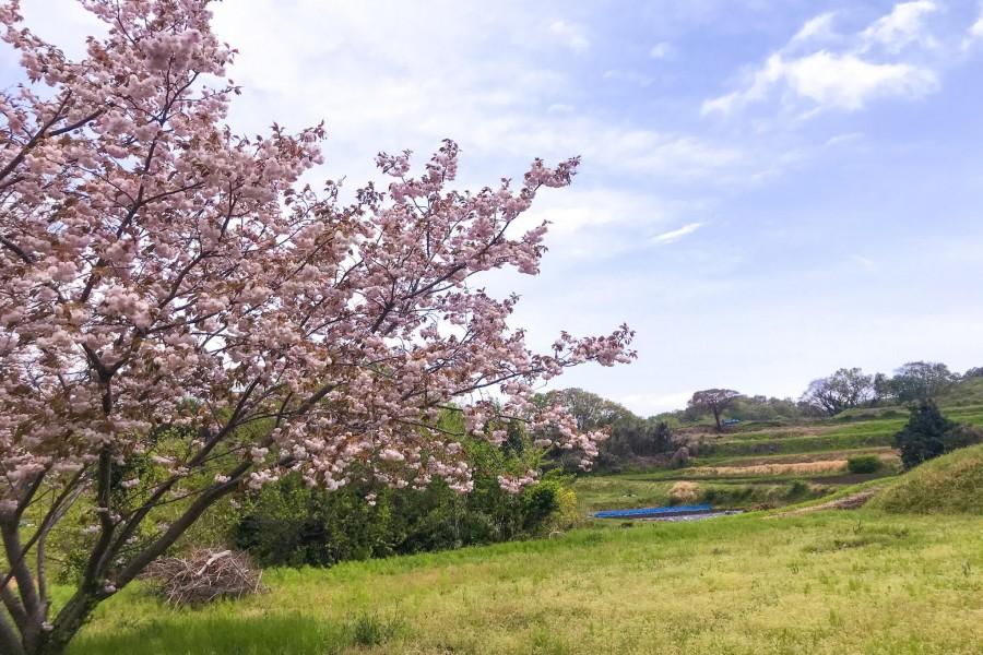Tám cảnh đẹp Kisawa (Đồi Yurugino)