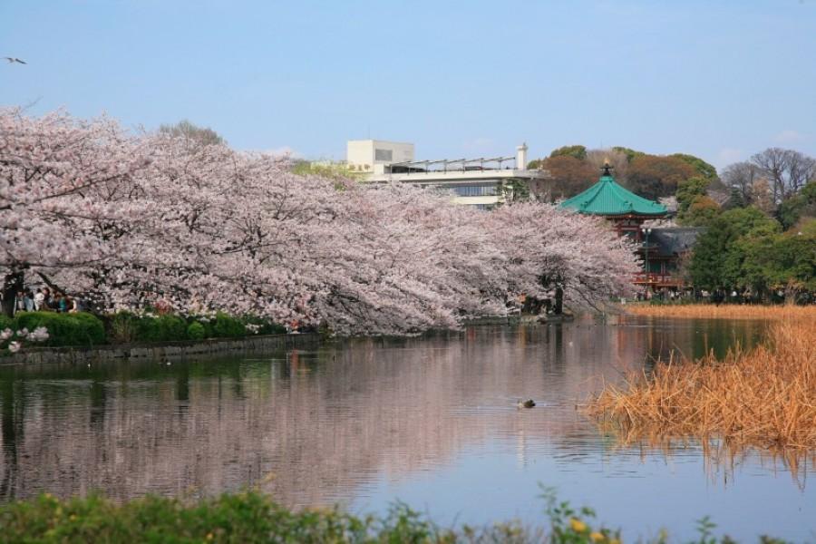 Công viên Ueno - 1