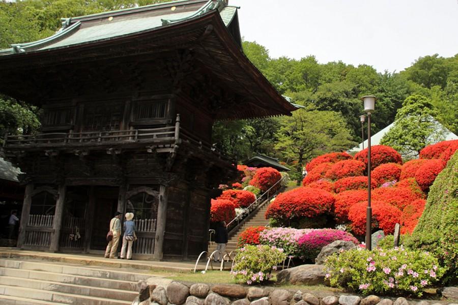Togaku im Tempel (Tsutsuji)