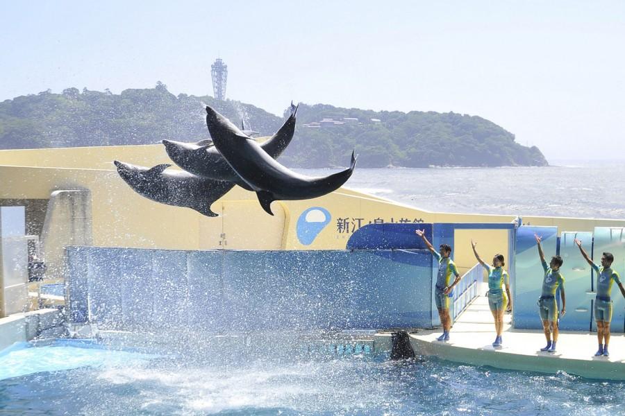 Enoshima Aquarium - 1