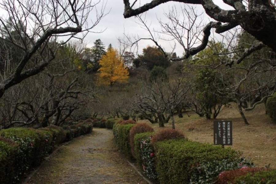 辻村植物公园 - 3