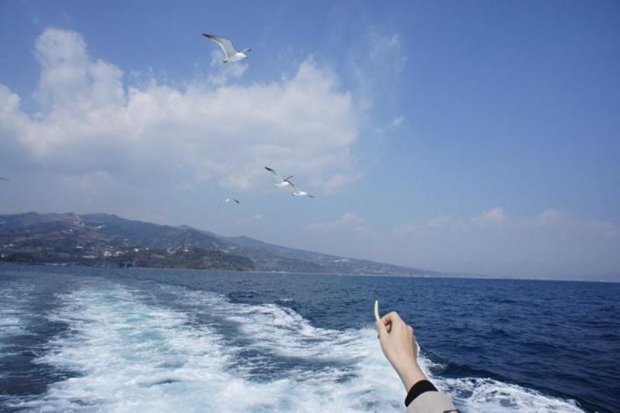 Manazuru Peninsula Pleasure Cruise - 2