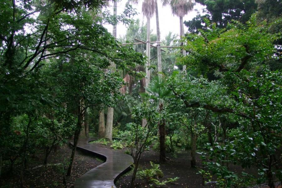 江の島サムエル・コッキング苑、江の島シーキャンドル - 1