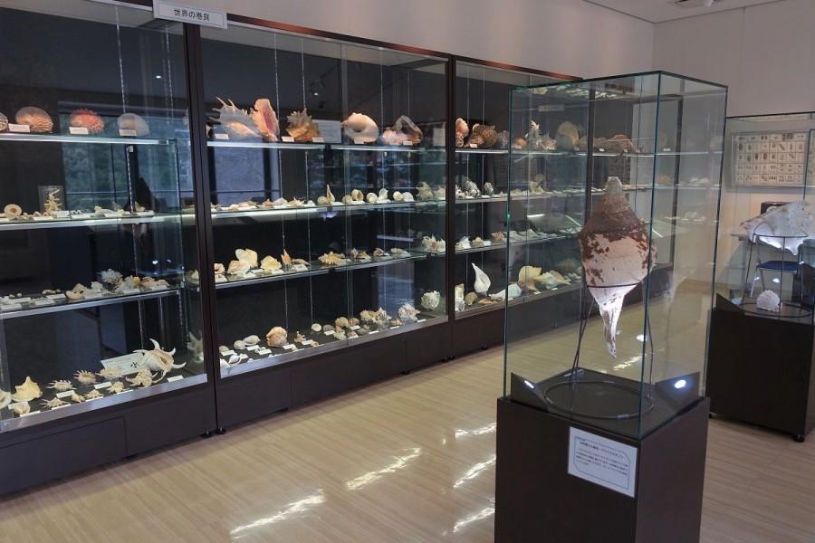 真鶴町立遠藤貝類博物館 - 2