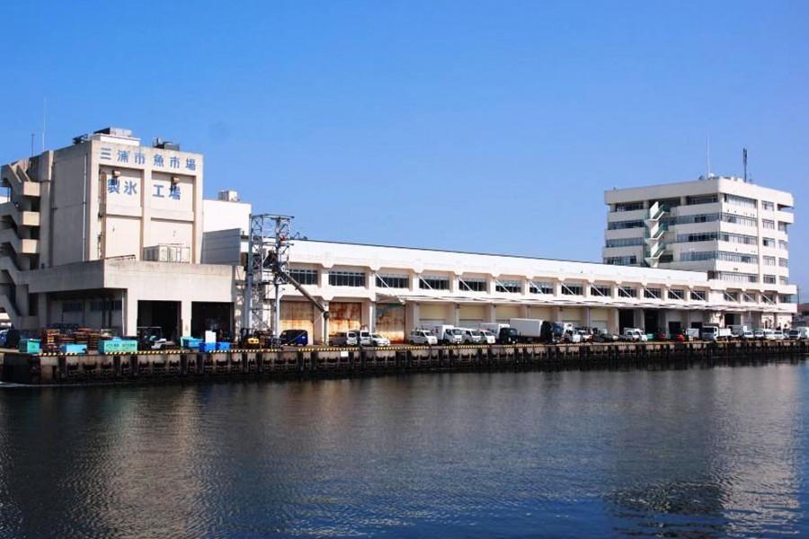 Chợ bán buôn hải sản Misaki thành phố Miura - 1