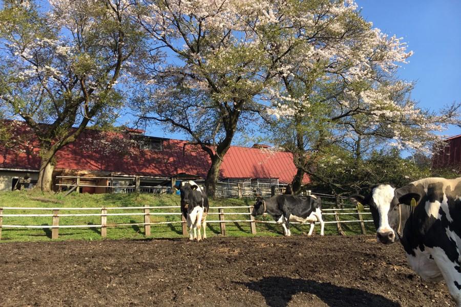 Hattori Ranch