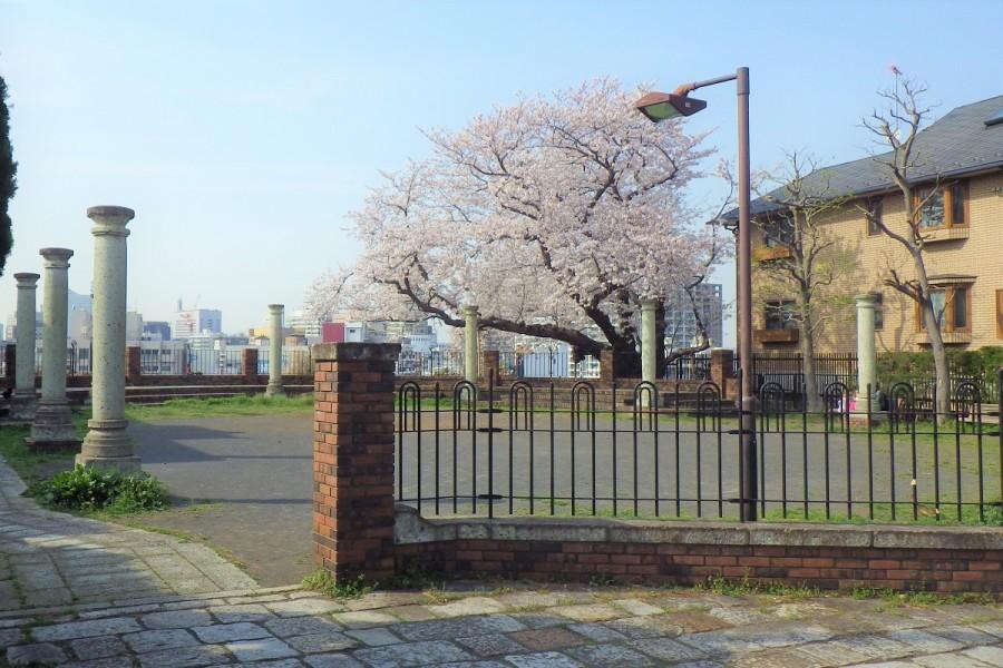 요코하마 햐쿠단 공원