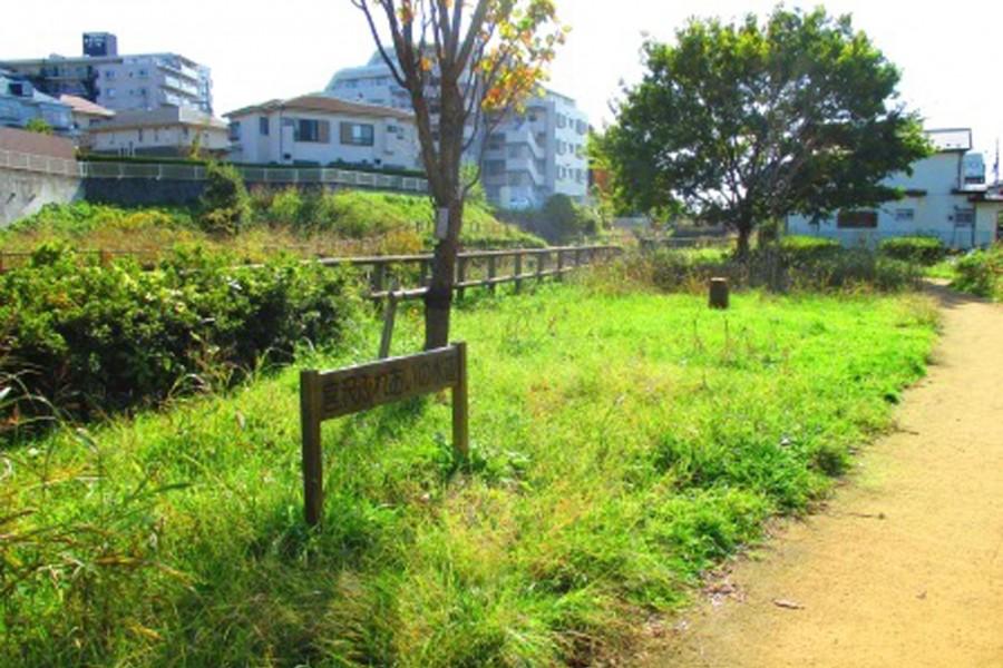 Sông Izumi - 1