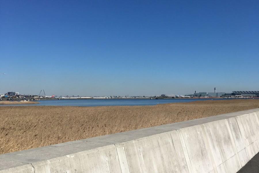 河口干潟・堤防樱 - 2