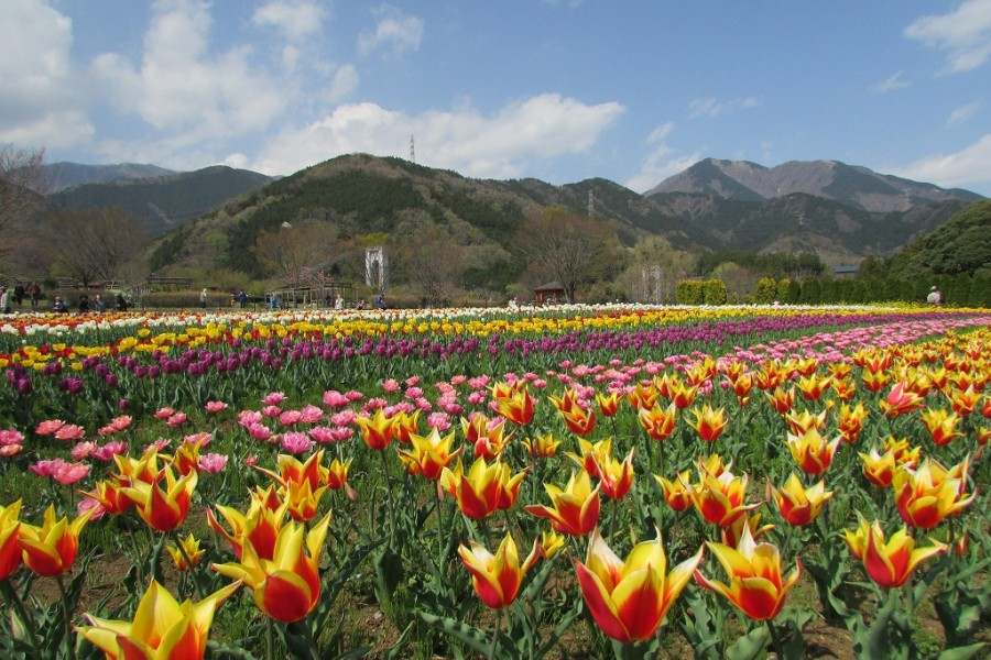 Hadano Tokawa Park - 2