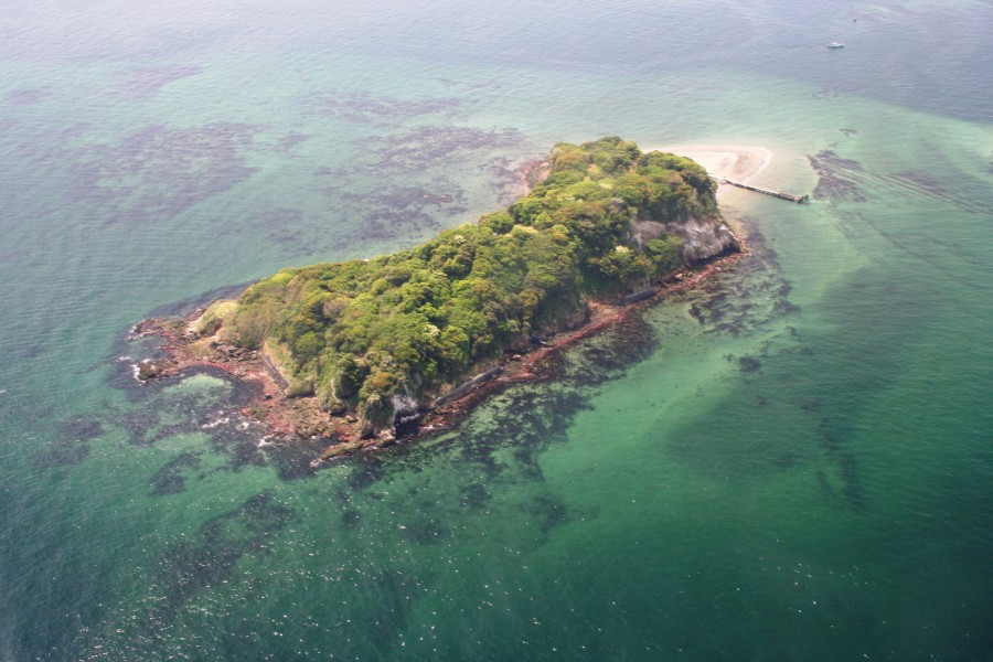 猿岛 - 1