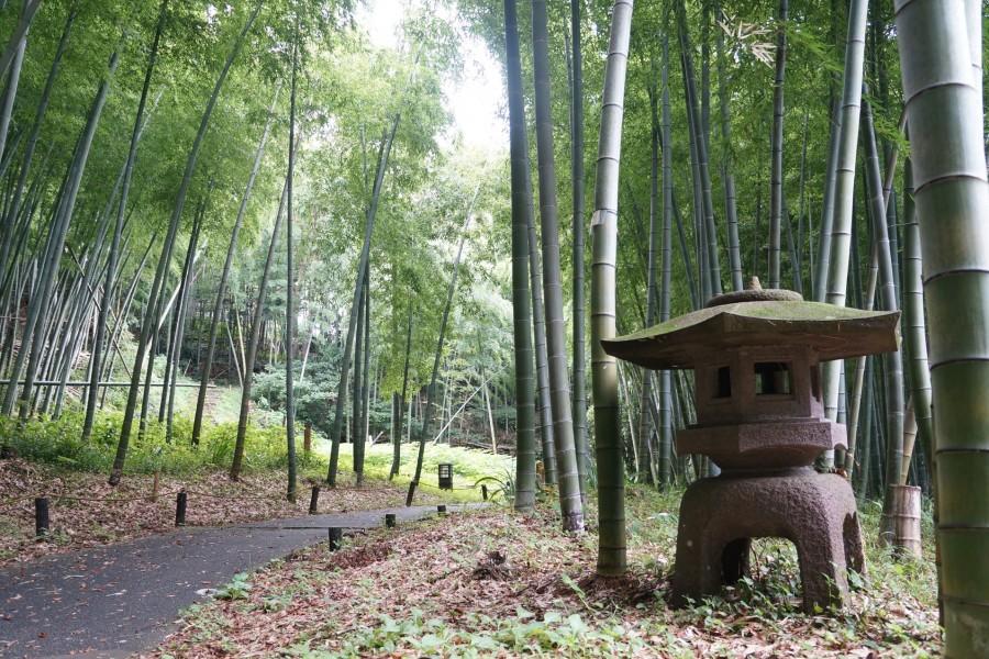 Le parc des ruines du château Arai - 1