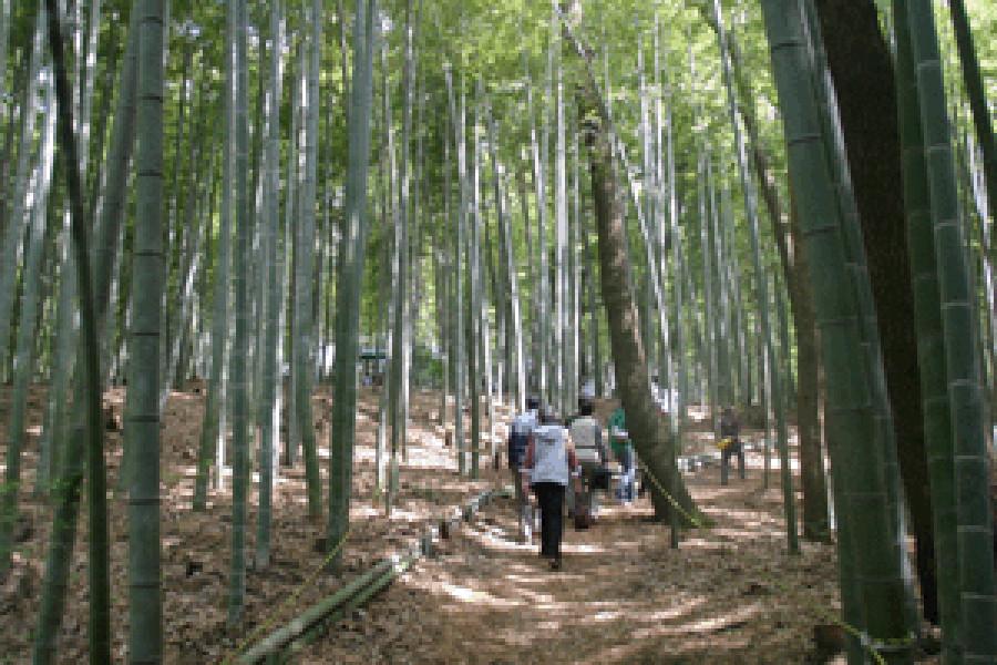 远藤竹炭祭