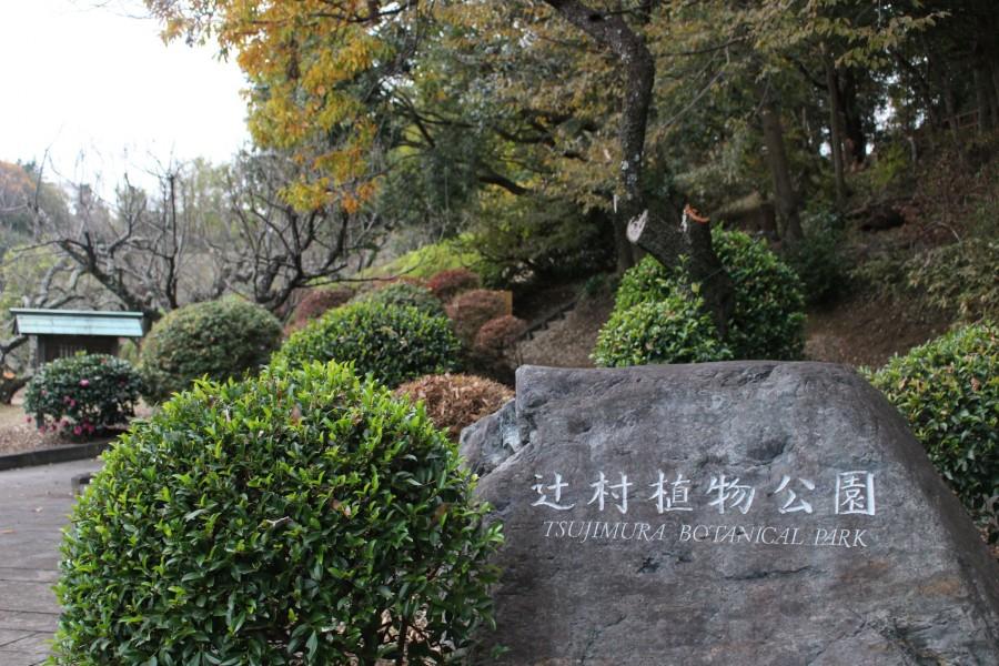 辻村植物公园 - 2