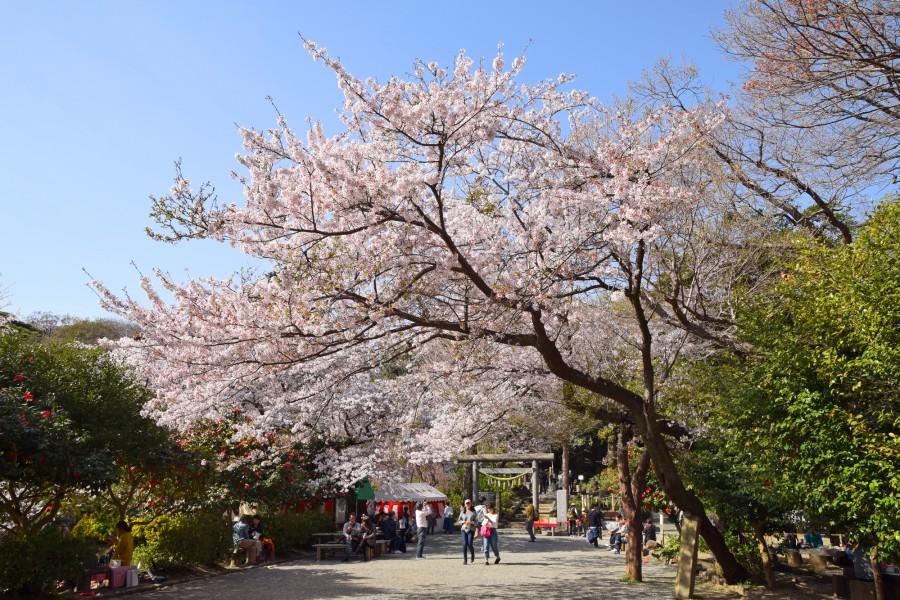 源氏山公園 - 3