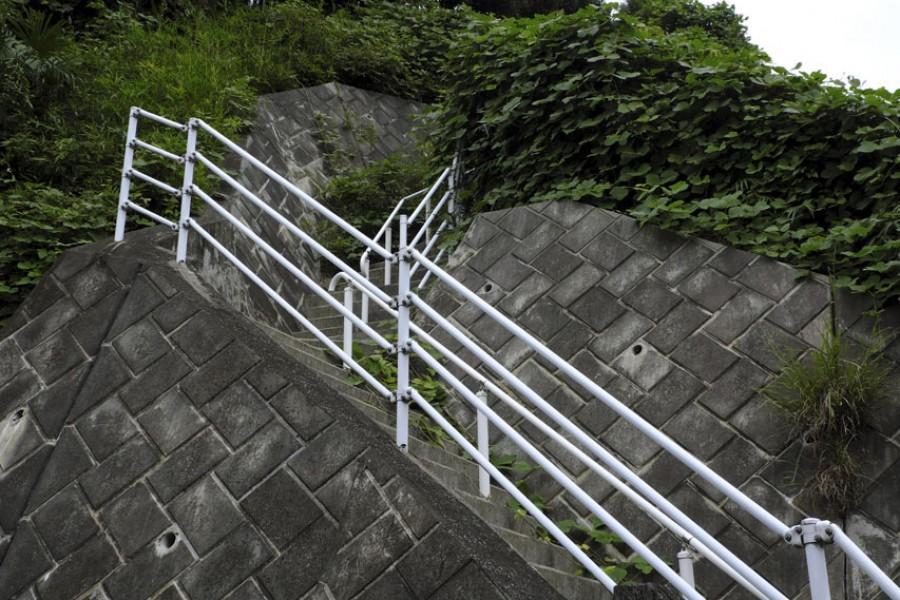 Suenaga-Kumanomori Green Park (Edo-mi sakura, Tarzan Tree) - 1