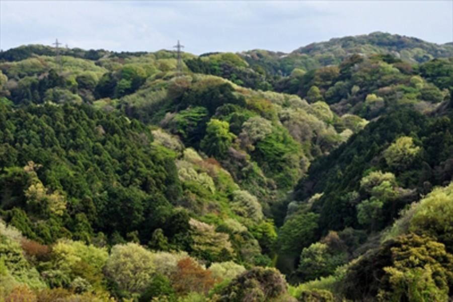 สวนไดมะรุ - 2