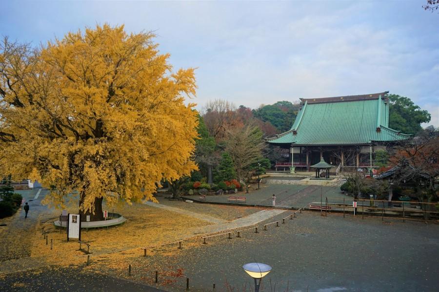 Le temple Yugyō-ji Temple et sa brocante  (Oicho, Fujisawa Yugyō-ji Temple Antique Flea Market) - 1