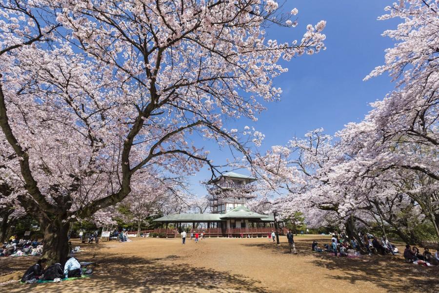 生田綠地公園園內散步(賞櫻景點) - 2