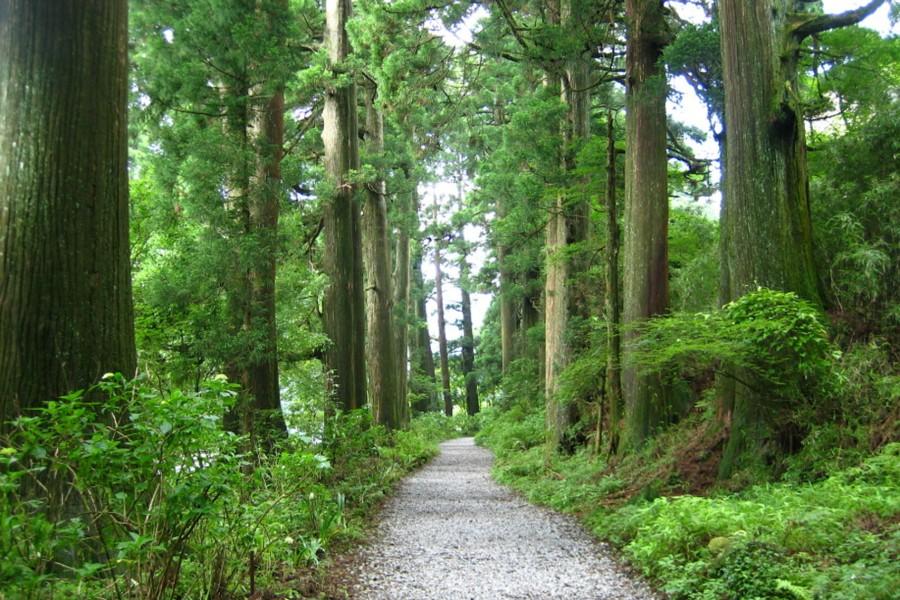 Alter Highway mit Zedernholz gesäumt - 1