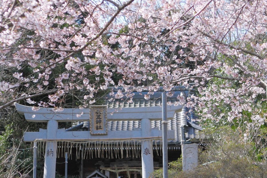 Công viên Kinugasayama - 2