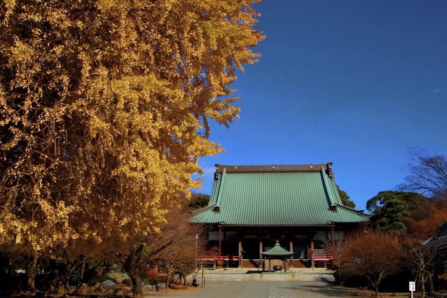 Yugyō-ji Tempel - 1