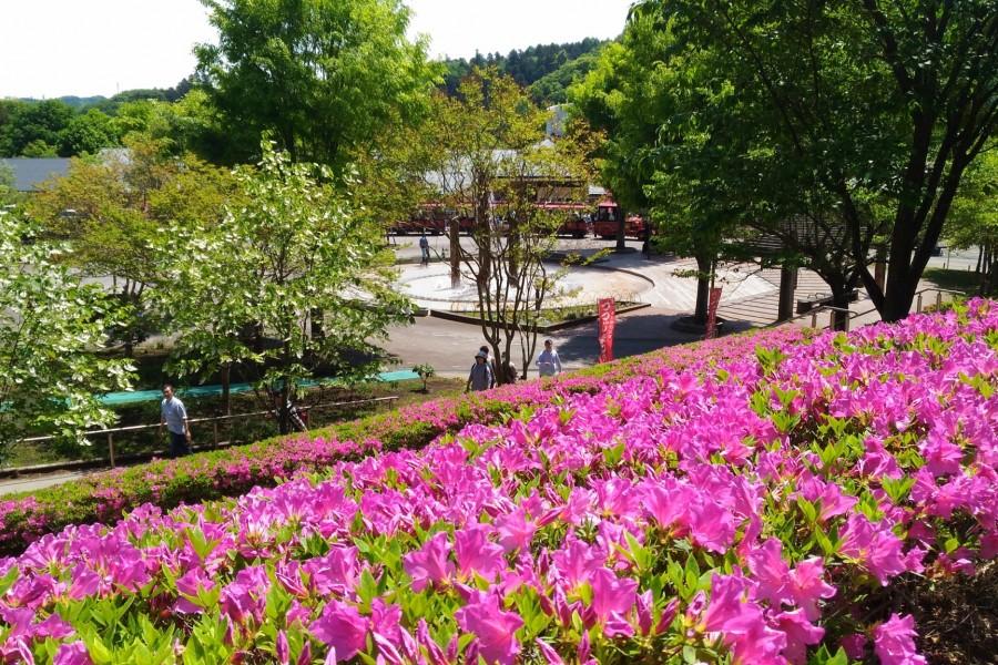 Parc Aikawa