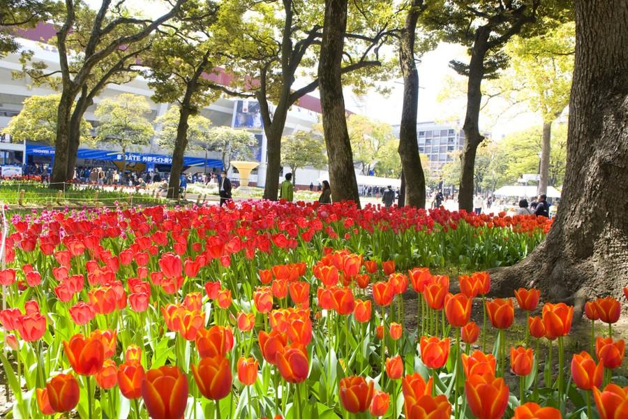 สวนโยโกฮะมะ - 1