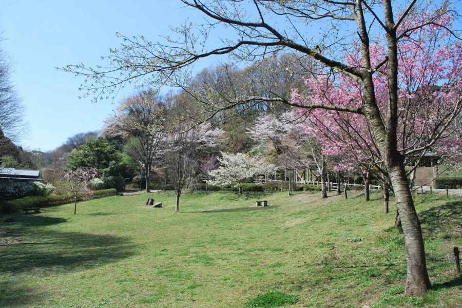 鎌倉中央公園 - 1