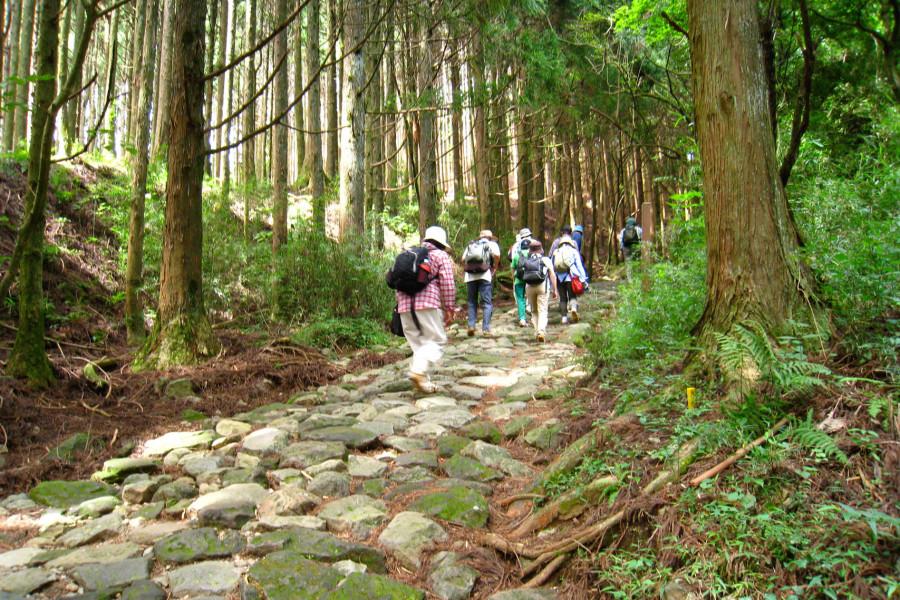 เส้นทางเดินป่าฮะโกะเนะ